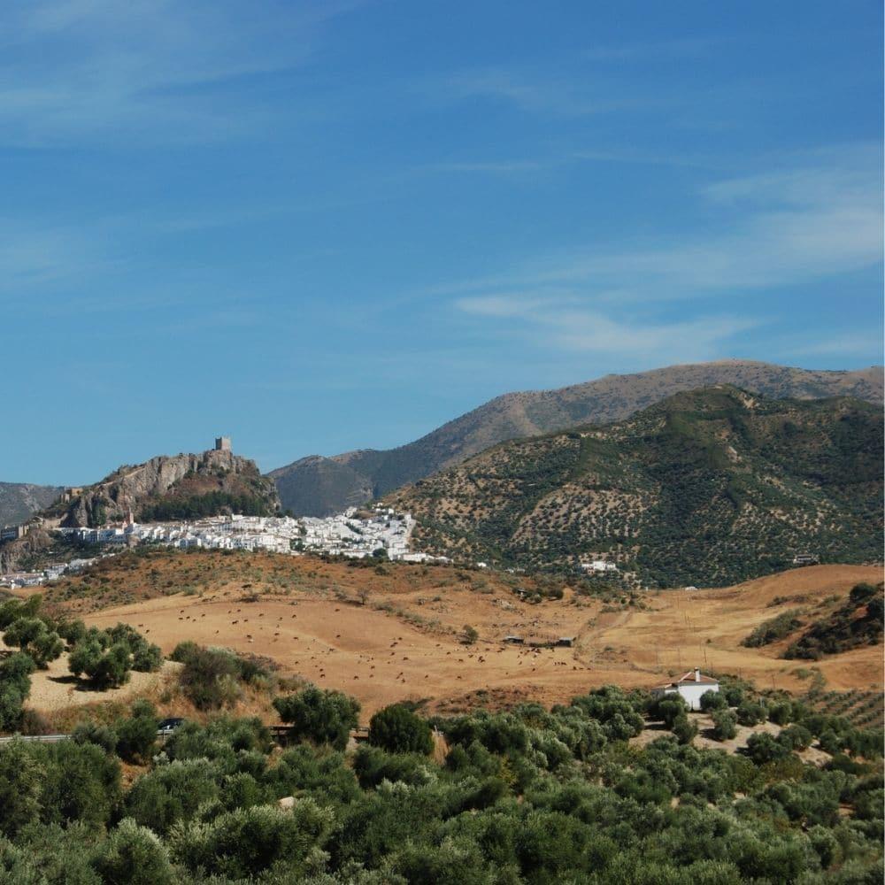 cadiz vuoristo oliivipuu saaren taika